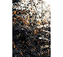 For All Things There is a Season Photographic Print