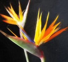Cut Bird of Paradise Flowers 2 Painterly by Christopher Johnson