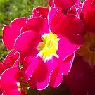 Flowers. by Maltie