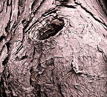 Tree Hideout by Jason Lee Jodoin