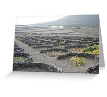 wine scape , lanzarote ,spain Greeting Card