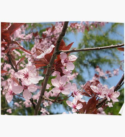 Spring Is Here At Last  Poster