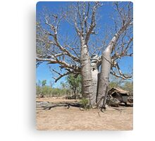 Boab at Manning Gorge Canvas Print