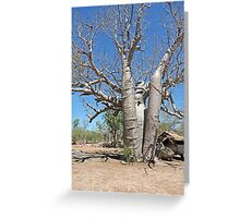 Boab at Manning Gorge Greeting Card