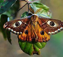 Una farfalla? Chi sa? by jimmylu
