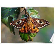 Una farfalla? Chi sa? Poster