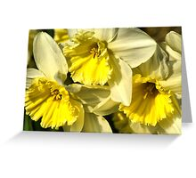 Yellow, Frilly, Daffys Greeting Card
