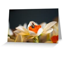 Tiny Nature Photographer Greeting Card