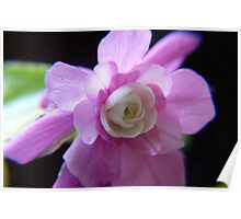 Double Impatience Flower Poster