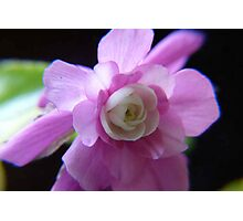 Double Impatience Flower Photographic Print