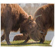 Bulls Fight  Poster