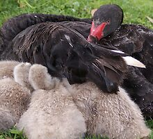 Mother and Babies 'Protection' by Liza Barlow