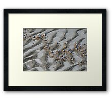 Soldiers Crabs Framed Print