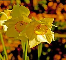 Daffodiles  by Renee D. Miranda