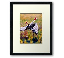 Brolga's Courtship Dance Framed Print