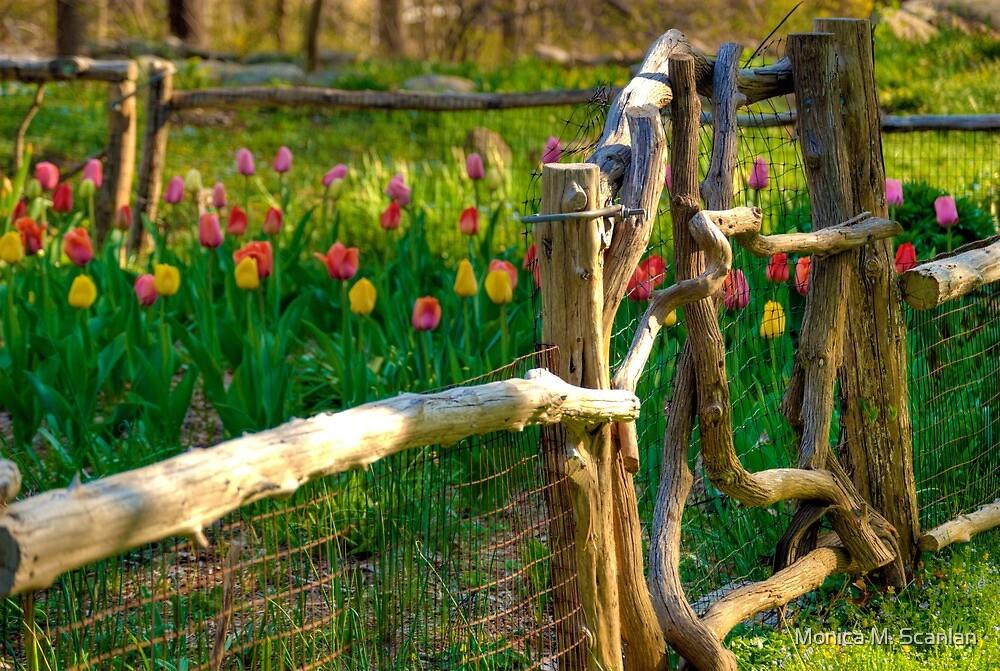 Tulips in the Garden by Monica M. Scanlan