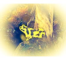 Black and Yellow Frog Photographic Print