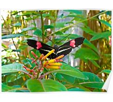 Beautiful Black and Red Butterfly on Green Leaves Poster