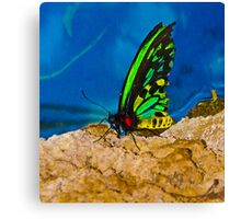 Beautiful Black and Green Butterfly Canvas Print