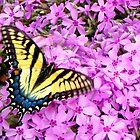 Butterfly Heaven by Kate Eller