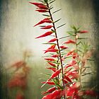 ~ Red and Wild ~ by Lynda Heins