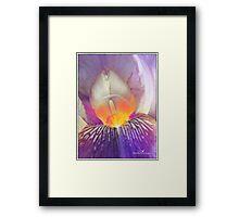 Blushing beauty Framed Print
