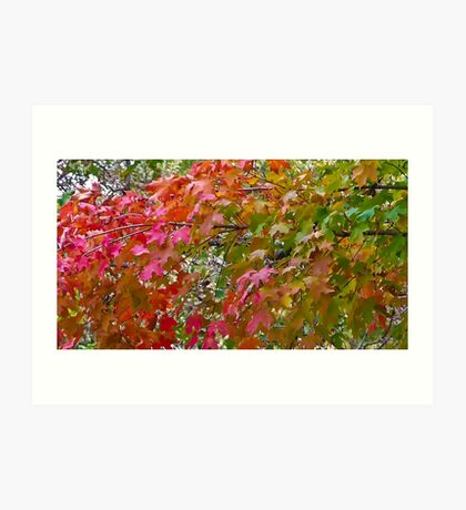 Red and Green Fall Leaves Art Print
