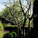Garden  by Elizabeth McPhee