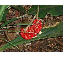 Hawaii plant Photographic Print