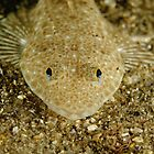 Juvenile Flathead by Andrew Trevor-Jones