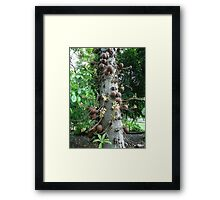 Cannon tree Framed Print