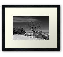 Lone Deadwood Framed Print