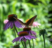 A Butterfly, A Bee And A Coneflower by James Brotherton