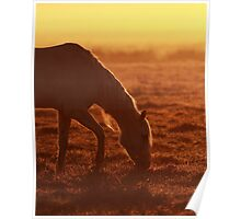 First light on the ranch Poster