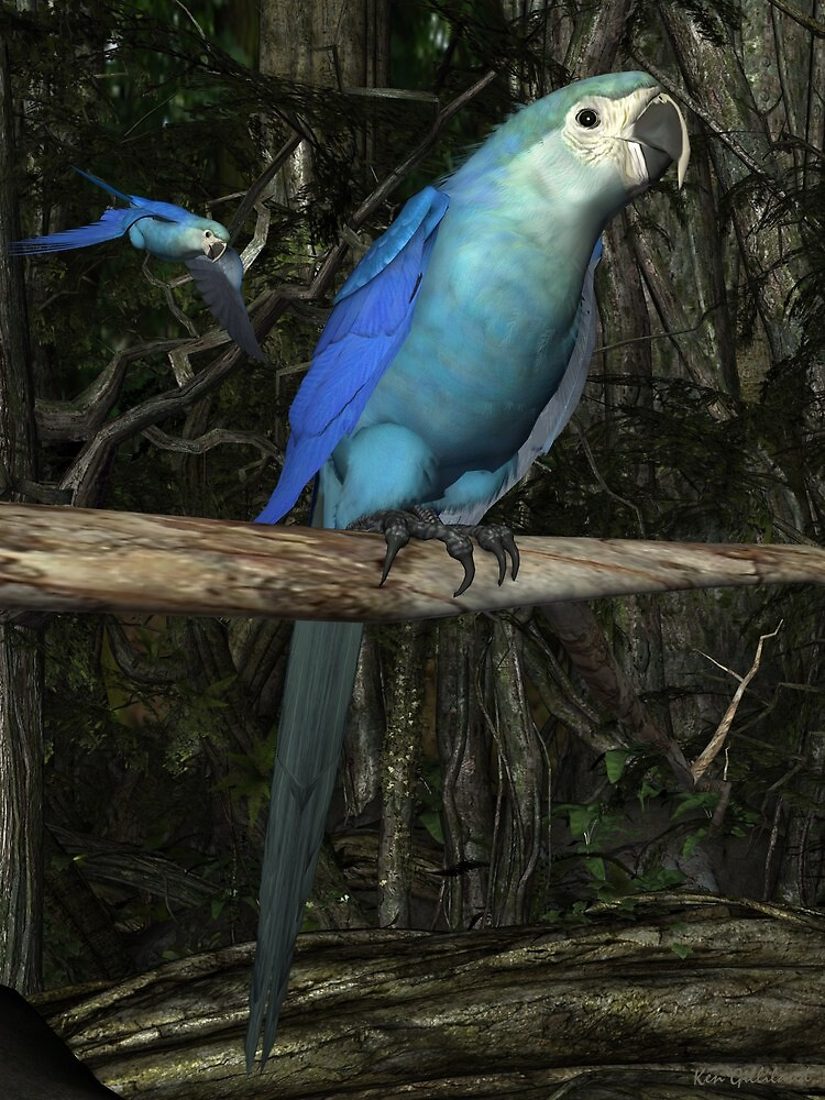 Spix's Macaw by Ken Gilliland