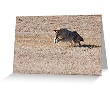 Pounce! Greeting Card