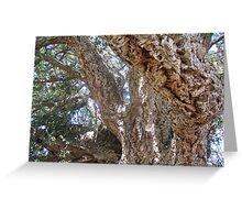 Old Cork Tree 4 Greeting Card