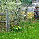 The Scent of Springtime by wiscbackroadz