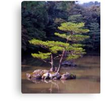 Ornamental Pine, Golden Pavilion, Kyoto , Japan. Canvas Print