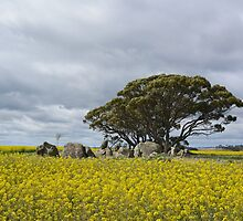 Island in the canola by adbetron