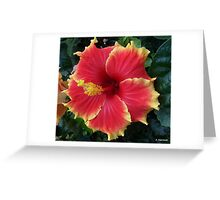 Large Red and Yellow Hibiscus Greeting Card