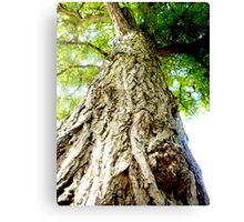 Looking up the tree Canvas Print