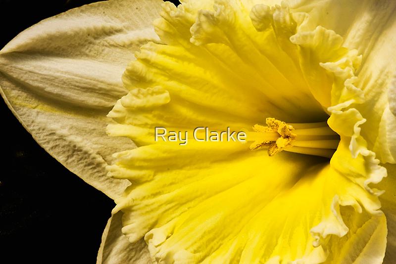 Frills by Ray Clarke
