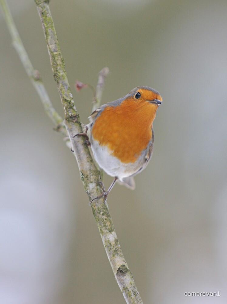 A Winter Robin Scene by cameravan1