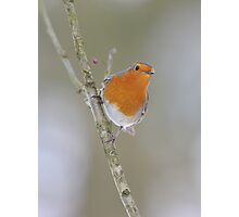 A Winter Robin Scene Photographic Print