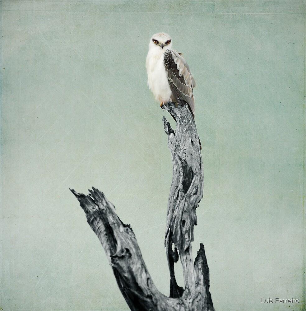 The Surveyor by Luis Ferreiro