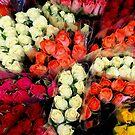 Flowers from Jersey... by BevsDigitalArt