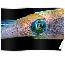 Colourful squid underwater Poster