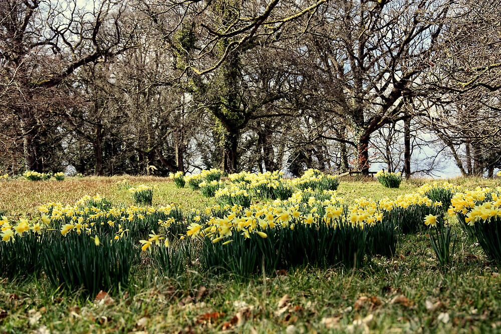 Spring on the Crom Estate by Julesrules