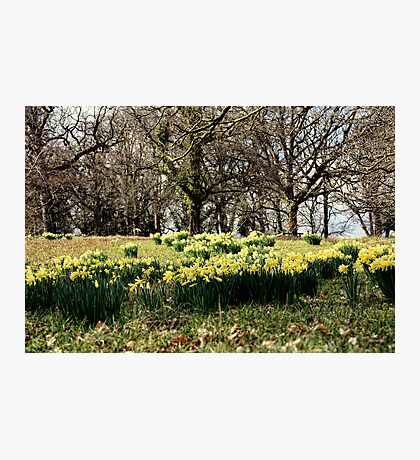 Spring on the Crom Estate Photographic Print